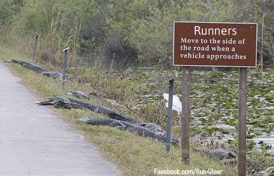 Runners + Alligators Nudge